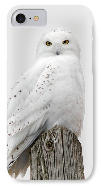 Snowy Owl Portrait IPhone Case by Timothy McIntyre