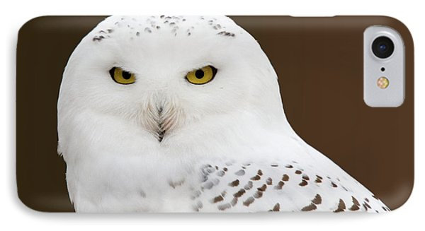 Snowy Owl IPhone Case by Steve Stuller