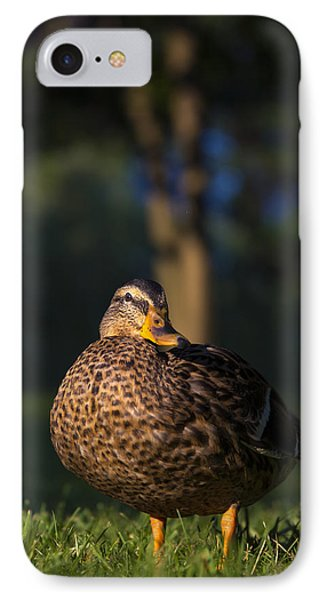 IPhone Case featuring the photograph Soak Up The Sun by Mark Papke
