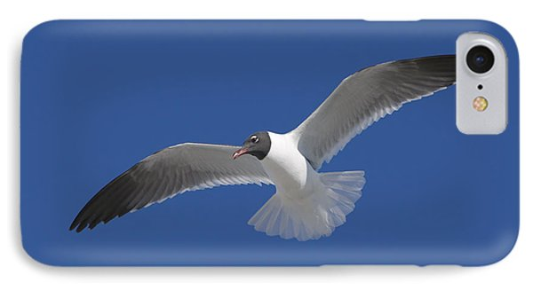 Soaring Gull IPhone Case by Clarence Holmes