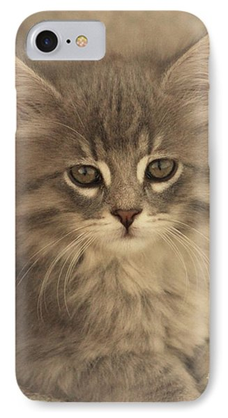 Soft Kitty IPhone Case by Tammy Miller