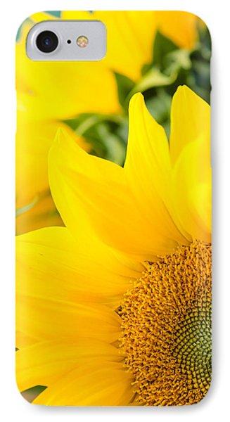 Soft Sunflowers IPhone Case
