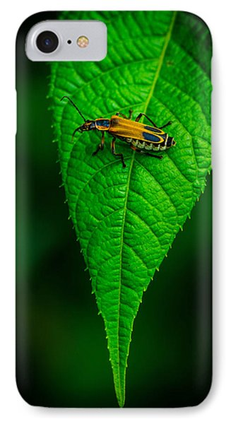 Soldier Beetle IPhone Case by Bruce Pritchett