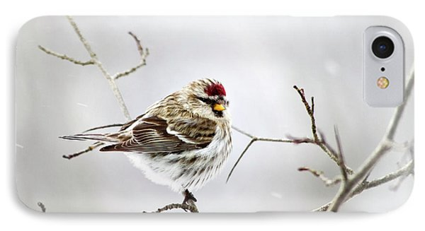 Solitary Redpoll Phone Case by Christina Rollo