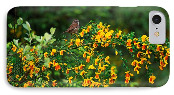 Song Sparrow Bird On Blooming Scotch IPhone Case