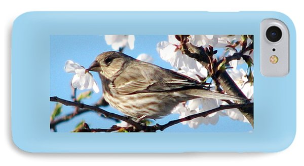 Song Sparrow Dining Out Phone Case by Angela Davies