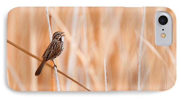 Song Sparrow IPhone Case