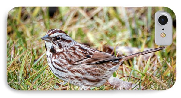 IPhone Case featuring the photograph Song Sparrow Sweetie by Kerri Farley