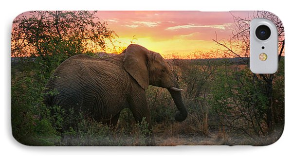 South African Elephant At Sunset - Black Rhino Reserve IPhone Case by Menega Sabidussi