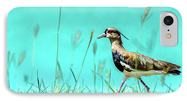 Southern Lapwing IPhone Case by Randy Scherkenbach
