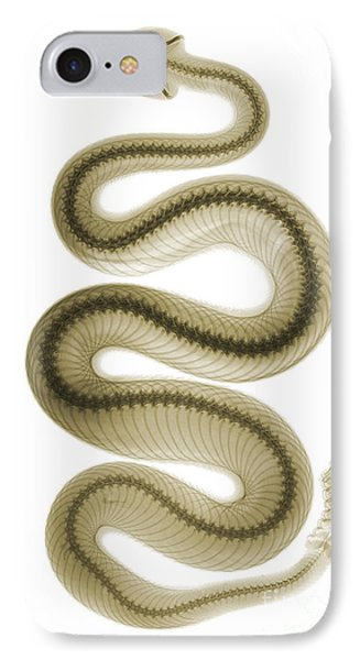 Southern Pacific Rattlesnake, X-ray IPhone Case by Ted Kinsman