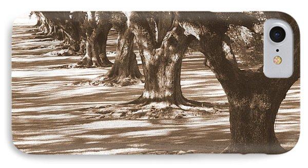 Southern Sunlight On Live Oaks Phone Case by Carol Groenen