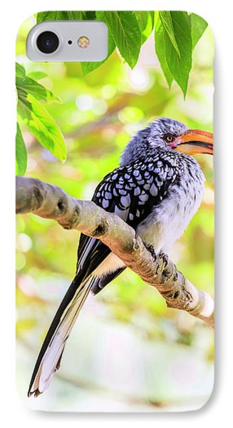 IPhone Case featuring the photograph Southern Yellow Billed Hornbill by Alexey Stiop