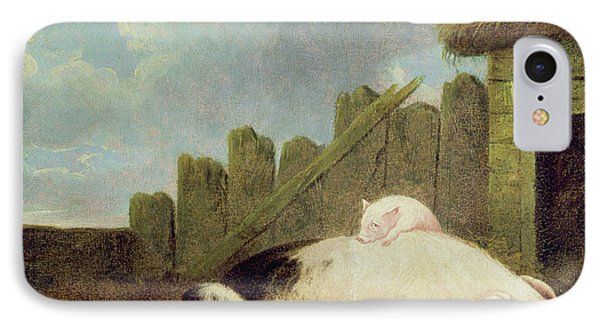 Sow With Piglets In The Sty  IPhone Case