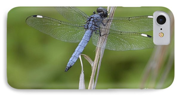 Spangled Skimmer IPhone Case by Randy Bodkins