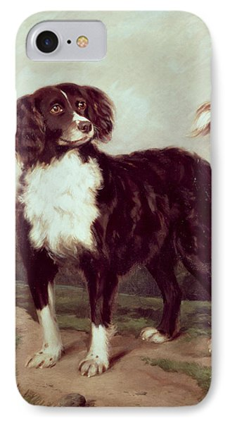Spaniel IPhone Case