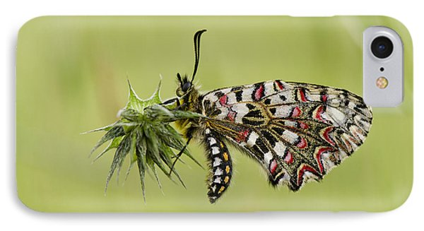 Spanish Festoon Butterfly IPhone Case by Perry Van Munster
