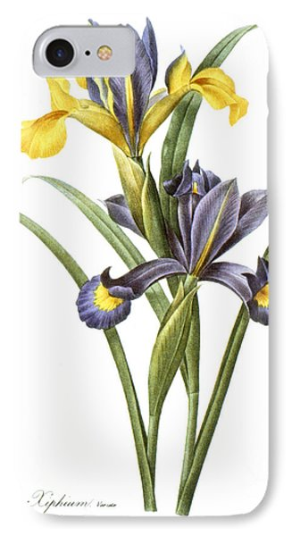 Spanish Iris IPhone Case by Granger