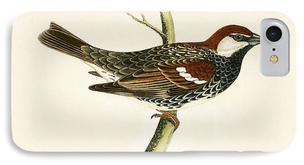 Spanish Sparrow IPhone 7 Case by English School