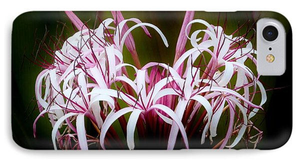 Spider Lilly IPhone Case by Amar Sheow