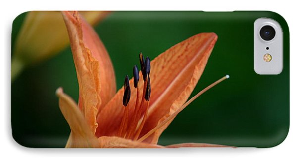 IPhone Case featuring the photograph Spider Lily 2 by Cathy Harper