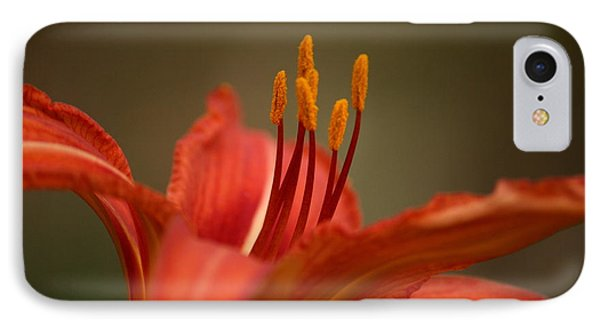 Spider Lily IPhone Case by Cathy Harper