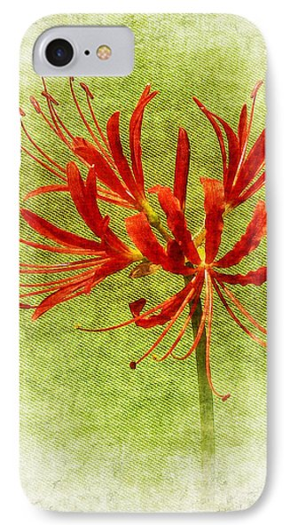Spider Lily IPhone Case by Judi Bagwell