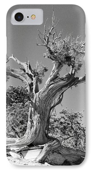 IPhone Case featuring the photograph Spirit Tree by Maggy Marsh