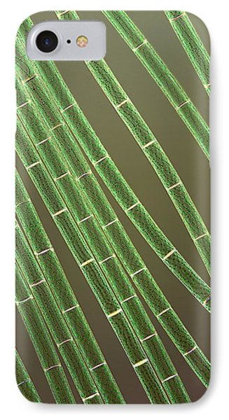 Spirogyra Algae, Light Micrograph Phone Case by Jerzy Gubernator