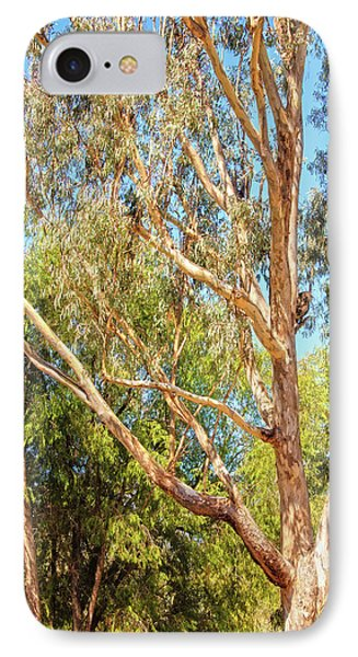 Spot The Koala, Yanchep National Park IPhone Case by Dave Catley