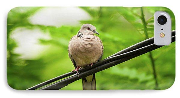 Spotted Dove   Phone Case by Venura Herath