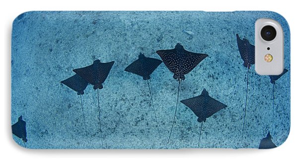 Spotted Eagle Rays Phone Case by Dave Fleetham - Printscapes