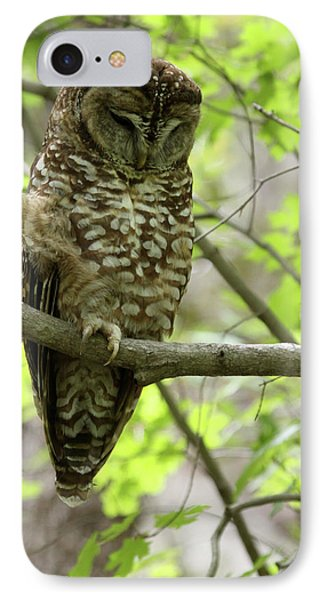 Spotted Owl IPhone Case by Brian Magnier