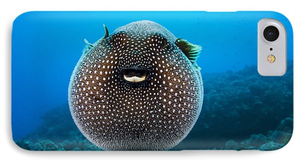 Spotted Pufferfish Phone Case by Dave Fleetham - Printscapes