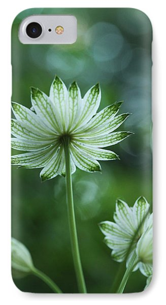 Botanica .. Spray Of Light IPhone Case by Connie Handscomb