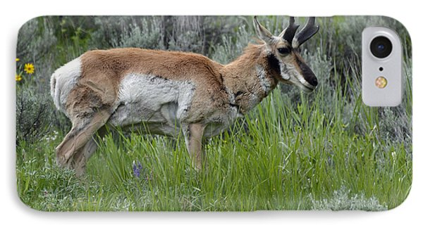 Spring Antelope IPhone Case