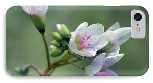 Spring Beauties IPhone Case by Ann Bridges