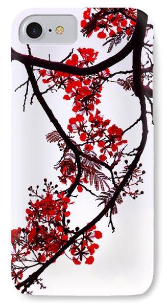 Spring Bloosom In Maldives. Flamboyant Tree Phone Case by Jenny Rainbow