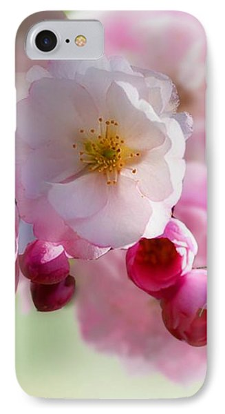 Spring Cherry Blossom IPhone Case by Morag Bates