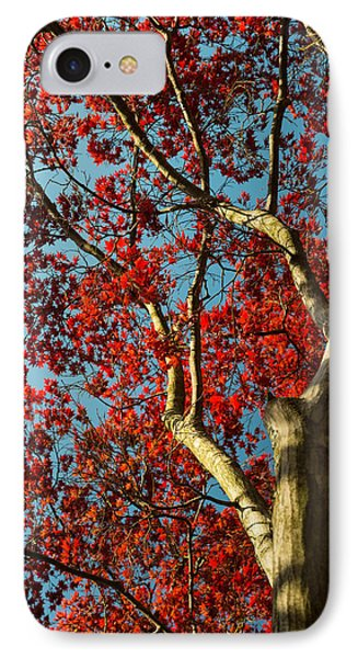 Spring Maple IPhone Case by Dana Sohr