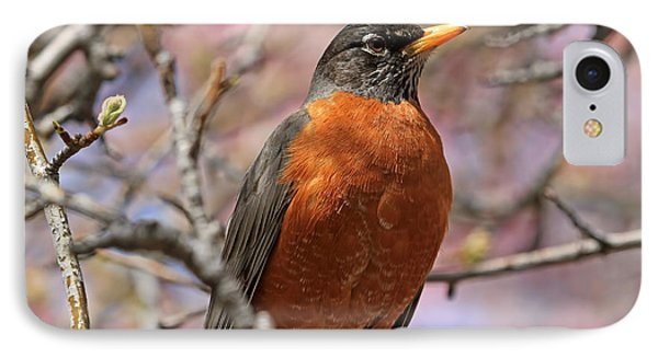 Spring Robin IPhone Case by Donna Kennedy