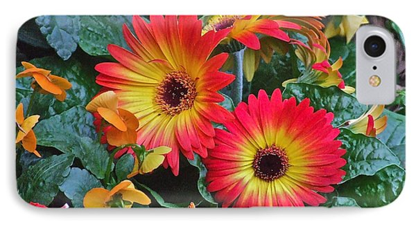 Spring Show 14 Gerbera Daisy 1 IPhone Case