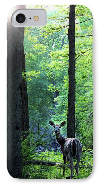 Spring Sunset On White-tailed Doe IPhone Case by Codee Hart