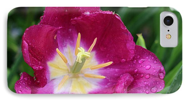 Spring Tulips 47 IPhone Case by Pamela Critchlow