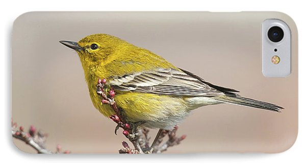 IPhone Case featuring the photograph Spring Warbler 1 2017 by Lara Ellis