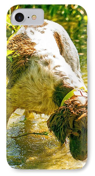 Springer Spaniel Field IPhone Case by Constantine Gregory