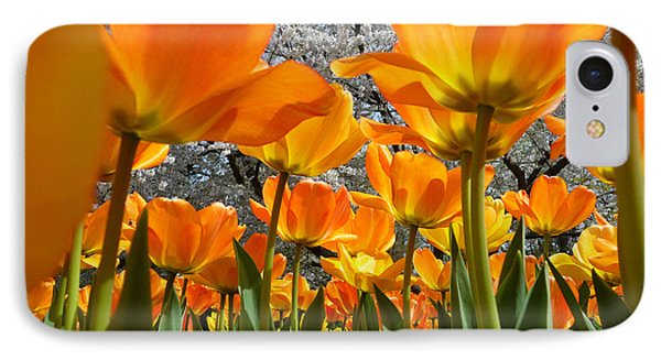 Springtime At Longwood Gardens 2015 IPhone Case by Dan Myers