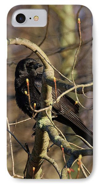 IPhone 7 Case featuring the photograph Springtime Crow by Bill Wakeley