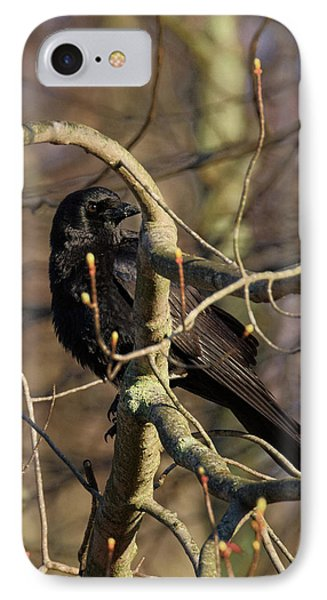 IPhone Case featuring the photograph Springtime Crow by Bill Wakeley