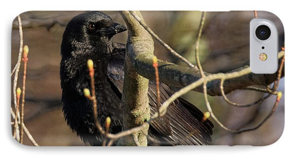 IPhone Case featuring the photograph Springtime Crow Square by Bill Wakeley